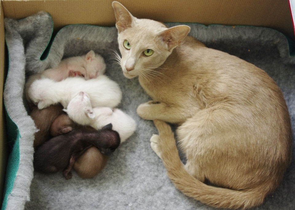 Eadlin with her kittens