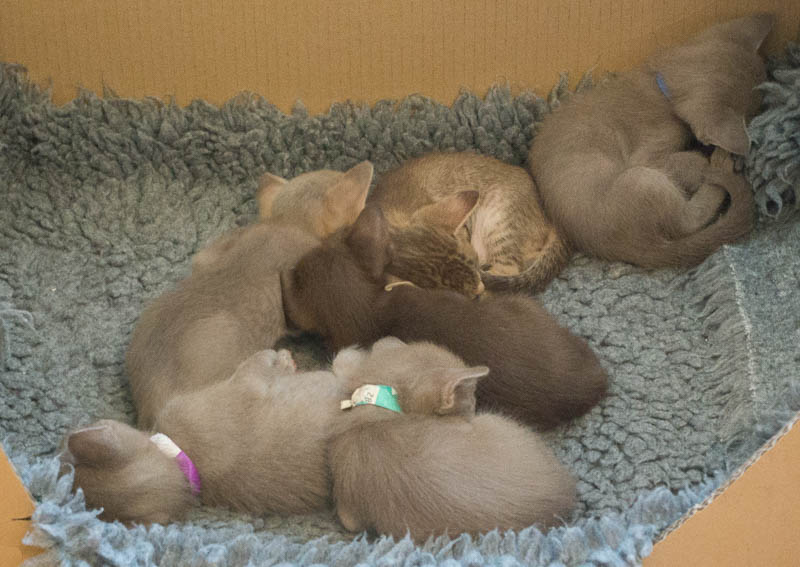 Aoife's kittens 15th July 15