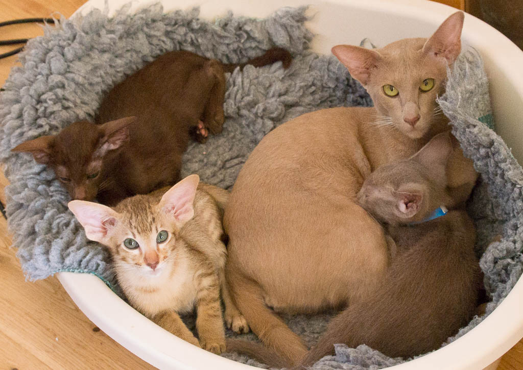 Aoife with three of her kittens