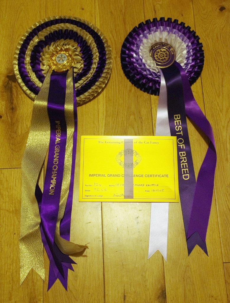 Rosettes & Certificate from the Yorkshire Show